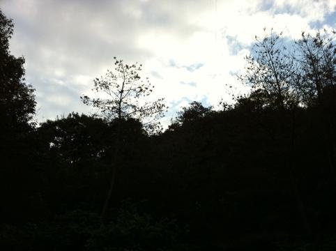 20110628-205433.jpg